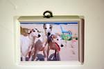 Dogs at the Beach  3x5  Custom Plaque $12.00